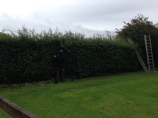 This hedge was in need of its routine trim...